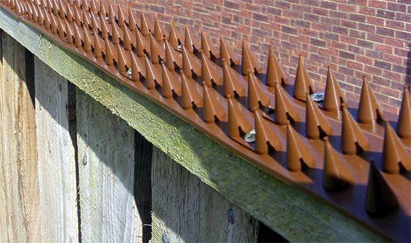 priklastrip-brown-on-fence.jpg