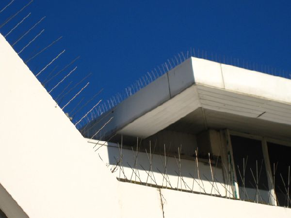 seagull-spikes-asda-p2-b1.jpg
