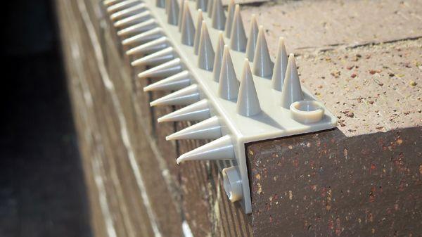 stv907-2-strips-cross-1.jpg
