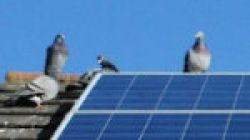How to Protect Solar Panels from Birds