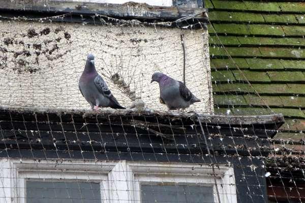 Bird Deterrent - Pigeon Deterrent - Seagull Deterrent
