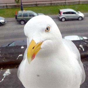 seagull on roof with bird droppings